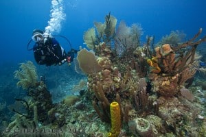 Belize Barrier Reef diving Turneffe Atoll Coral