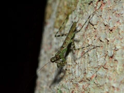 Insect on tree at night