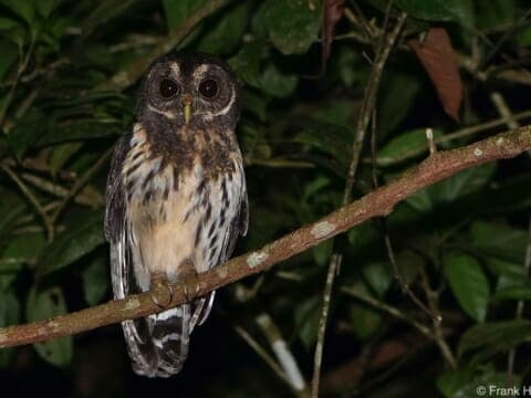Owl seen on night hike